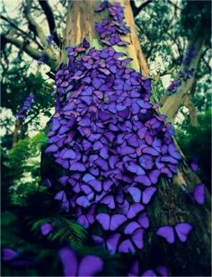 Butterflies at Rest. Amazingly Beautiful.