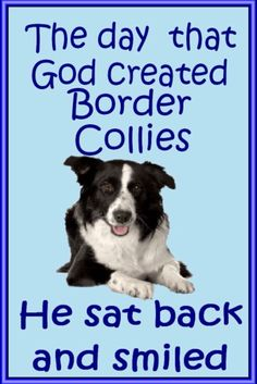 Find everything but the ordinary Border Collie Puppies, Collie Dog, Collie Breeds, I Love Dogs, Puppy Love, Cute Dogs, Thing 1, Animal Quotes, Working Dogs