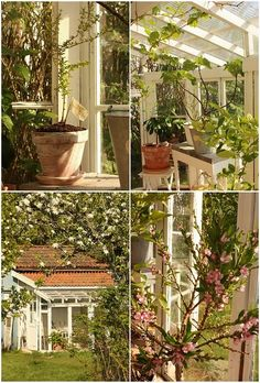 giardino d'inverno....