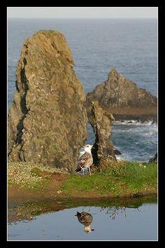 #Bretagne #Morbihan - à Belle Ile en Mer vers 9 H à Port Coton, reflet © Paul Kerrien @ http://toilapol.net