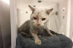 'Kitten' rescued from raccoon trap identified as 9-year-old cat