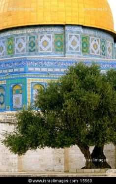 Dome of the Rock with an Olive Tree on temple mount, jerusalem Dome Of The Rock, Temple Mount, See Images, Olive Tree, Holy Land, Cityscapes, Jerusalem, Art And Architecture, Israel