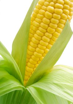 Recipes: Corn on the cob