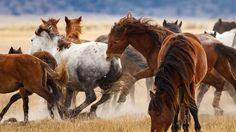 Ken will serve as your photography instructor for this unique adventure offered by Rock Creek Pack Station as we track and photograph a thriving herd of wild horses on foot and horseback through a stunningly picturesque setting. https://artofseeing.com/wild-mustangs