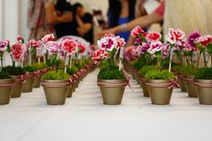 potted flower favors
