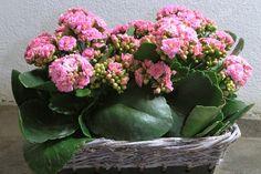 """Képtalálat a következőre: """"cserepes virágok"""""""