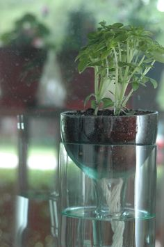 Self watering planter made from recycled wine bottles.  I'm thinking these would be perfect for herbs or african violets!