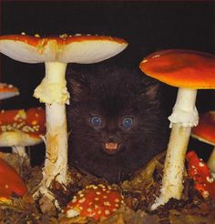 cat and mushroom...DON'T EVEN LICK THEM
