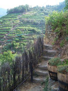 Vernazza, Cinque Terre . Viñas