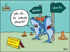 shark-cartoon-97