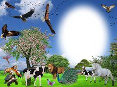 "Beautiful Photos: Free Wallpaper "" My little zoo"""