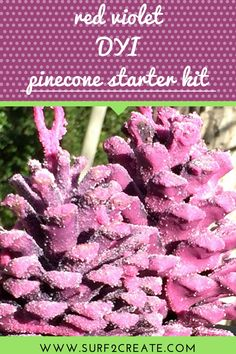 Pinecone Starter Kit with a Twist Create And Craft, Pinecone, Salts, Starter Kit, Glow, Craft Ideas, Colors, Amazing, Table