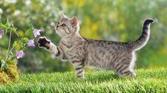 【猫の壁紙☆】  猫の壁紙でデスクトップに癒しと安らぎを☆ 猫の壁紙・猫画像22選!!  読んでみる  ↓ ↓ ↓ 【】RT