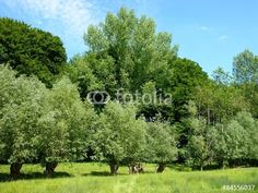 Grüne Wiese mit Bäumen im Frühling am Grütebach bei Oerlinghausen im Teutoburger Wald
