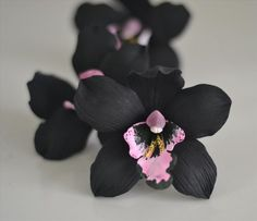 black orchid – CakeArt and Sugarcraft Unusual Flowers, Amazing Flowers, Beautiful Flowers, Orchid Cactus, Orchid Plants, Orchid Terrarium, Orchid Flowers, Black Orchid, Black Flowers
