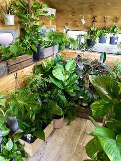 Gypsy Yoga Mama POP Up So many beautiful indoor plants on The Plant Runner Caravan! Indoor Garden, Indoor Plants, Garden Center Displays, Jungle House, Flower Truck, Pop Up Market, Tree Shop, Neem Oil, Fruit Garden