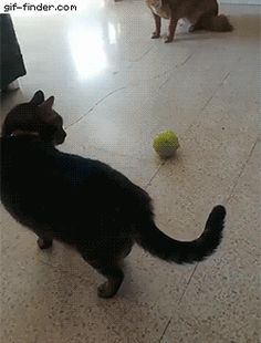 Even for cats, ball is life