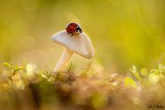 ... by Ziad AbdulAziz - 500px: Popular photos