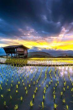 Mae Jam Rice Terraces Chiang Mai Thailand