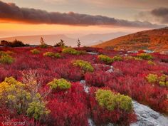 Red Blueberry Sunrise in West Virginia by Kent Mason