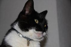 """Hast Du auch so eine """"Katze wie Felix"""" zu Hause, die dich nachts weckt? #ad"""