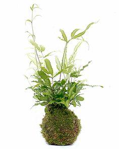 Kokedamas en SHOPA. Pon una planta en tu casa, te encantará!