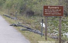 Meanwhile in Florida, the alligators have developed sign making skills. - Imgur