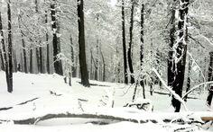 Sierra de Arteaga. Snow, Sierra, Outdoor, Google, Life, Outdoors, Outdoor Games, The Great Outdoors, Eyes