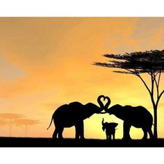 A beautiful picture of two elephants making heart with their trunks.