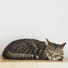 Bye Meownday & hello tuesday!  #luckythecat #love #cute #catsofsalzburg #unterfoehring #germany #cat #meow #ilovemypet #catlovers #lovekittens #instapet #catsagram #kitten #kitty #catstagram #kittycat #catsofinstagram #ilovemycat #catlove #catoftheday #furry #cats_of_instagram #cats #catlife #katze #katzenliebe #miezekatze #bestmeow