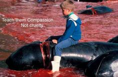 """ FAROE ISLANDS"" THIS IS WHAT THEY TEACH THEIR CHILDREN!!! THEY DO THE SAME THING JAPAN DOES EVERY YEAR BUT WITH SMALL WHALES** IN WHAT FLUFFING WORLD IS THIS PICTURE OK?? THAT WHALE ISN'T EVEN DEAD AND A CHILD IS SITTING ON IT!!! KIDS HELP KILL THEM IN THAT SHALLOW WATER** PEOPLE CHEERING THEM ALL ON!!!!! NOT RIGHT, ANYWHERE!!!!!!!!!!!"