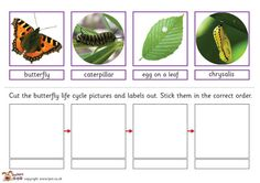 Here's a butterfly life cycle sorting activity.
