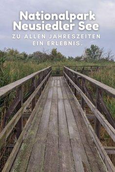 #Nationalpark #Tiere #Burgenland #NeusiedlerSee #Österreich ... Lofoten, Railroad Tracks, Tricks, Highlights, Outdoor, Pictures, Perfect Photo, Adventure Travel, Rodents