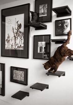 blog de decoração - Arquitrecos: Camas (e diversão) para pets + Pesquisa de Mercado Arquitrecos