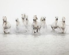 Photographie de cheval Grand Wall Art Print Horse Print Nature Photography White Horses Running in Water Fine Art Print Large Art All The Pretty Horses, Beautiful Horses, Animals Beautiful, Cute Animals, Wild Animals, Baby Animals, Beautiful Women, Horse Photography, Fine Art Photography