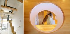 Japanese Cat-friendly House Design with human-friendly accesses to clean the upper levels!