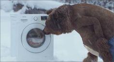 Samsung VS medve
