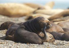 Тюлень в раздумьях