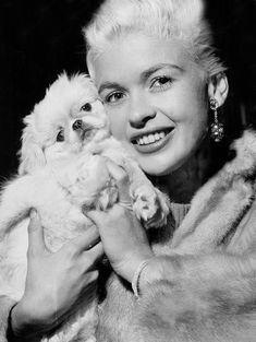 Pekinese, Jayne Mansfield, Norma Jean, Bombshells, Marilyn Monroe, Movie Stars, Mystery, Hollywood, Glamour