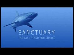 Trailer for Sanctuary: The Last Stand for Sharks