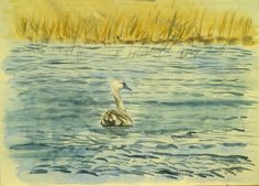 mute-swan.jpg (700×504)