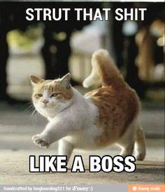Strut it baby!!!!!!!!!
