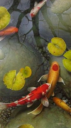 Terry Gilecki is a highly aclaimed painter of the beautiful Koi fish and the surreal world they live in. His paintings and prints are collected world wide. Koi Fish Pond, Fish Ponds, Coy Pond, Koi Painting, Stone Painting, Fish Paintings, Koi Art, Fish Art, Koy Fish