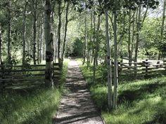 Backyard Pathway.