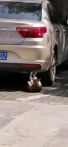 Nature Animals, Animals And Pets, Funny Animals, Funny Vid, Funny Cats, Cute Cats, Pet Home, Inappropriate Jokes, Summer Body