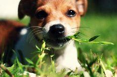 Atenção: Se você possui animais de estimação essa é especialmente pra você!<br />É muito comum o uso de plantas ornamentais para decoração de casas e apartamentos. O que é completamente compreensível, afinal, elas trazem vida ao ambiente junto a cores e beleza. O que muitas pessoas não sabem é que existem diversas plantas que podem fazer mal a cães e gatos, levando-os até mesmo à morte. É bem comum que animais de estimação comam plantas ou grama e isso infelizmente pode acarretar uma série…