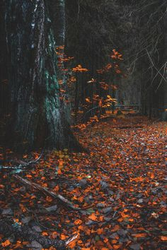 "lsleofskye: "" Forest Path """