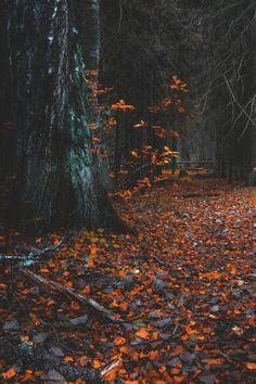 "lsleofskye: "" Forest Path """