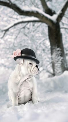 ❤ Eläimet (from Finland ~ beautiful baby in the snow!) ❤ #englishbulldog