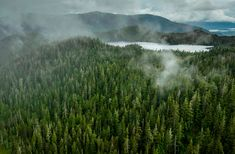 An ancient forest in Alaska loses environmental protections News Around The World, Around The Worlds, Tongass National Forest, Environmental News, Camping Spots, Forest Service, Ecology, National Geographic, Alaska